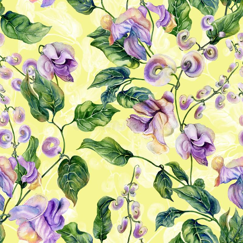 Beautiful snail vine twigs with purple flowers on yellow background. Seamless floral pattern. Watercolor painting. Hand painted vector illustration