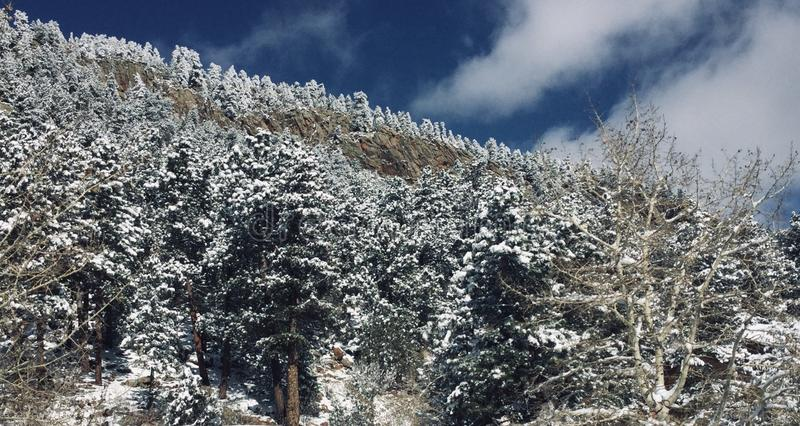 Beautiful snow-covered forest mountainside royalty free stock image