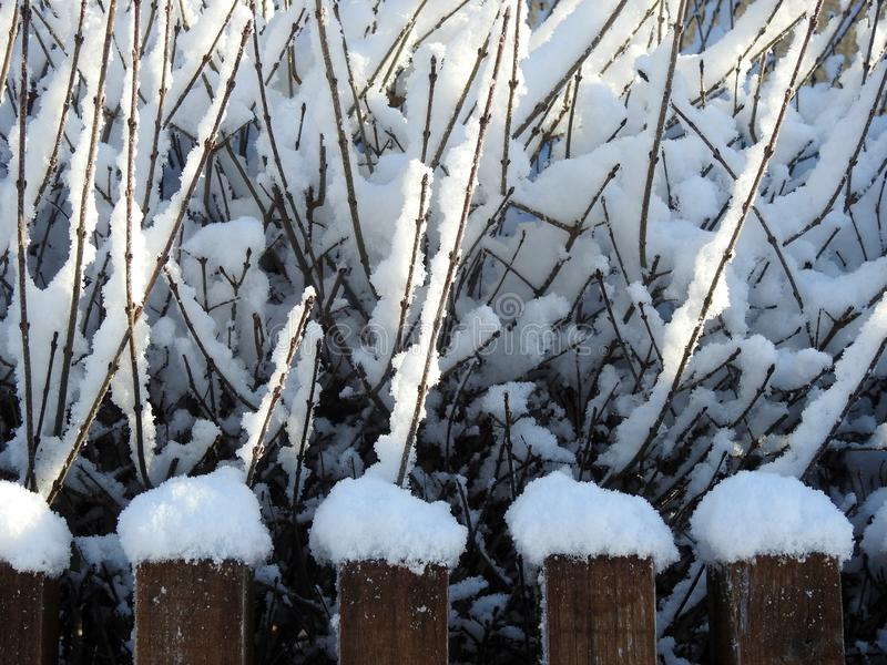 Snowy branches and wooden fence, Lithuania royalty free stock image