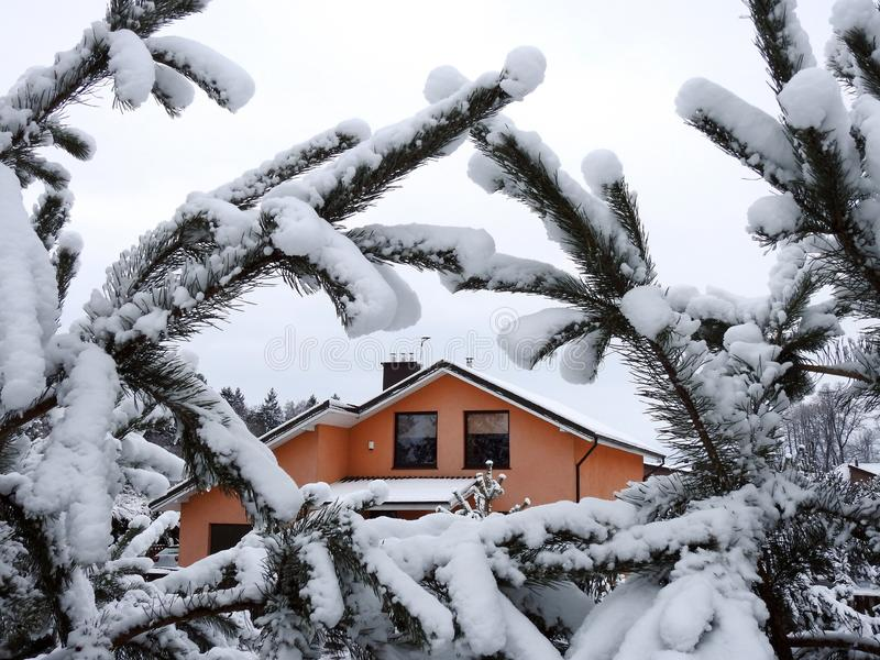 Beautiful snowy pine tree branches and home , Lithuania royalty free stock photography