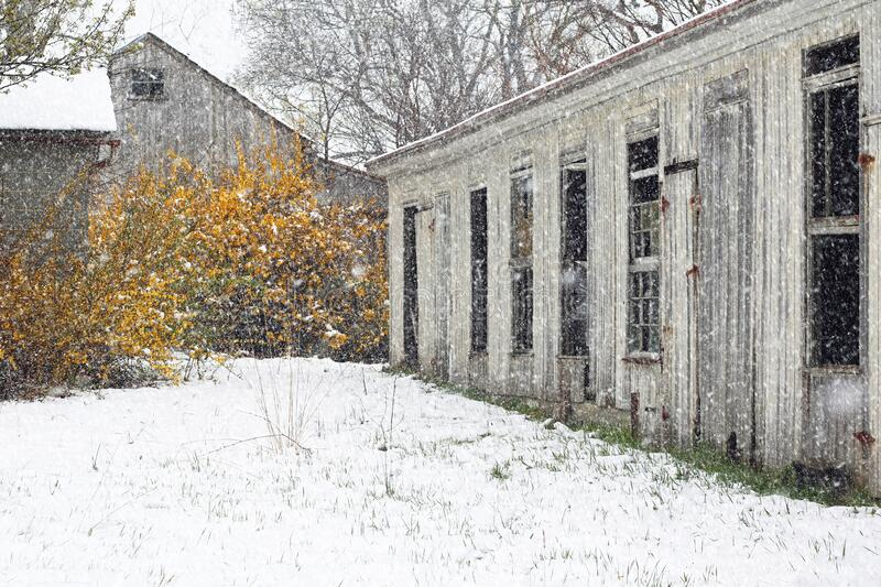 Abandoned Barn in April Snowstorm. Beautiful snowy scene of an abandoned barn during an April snowstorm royalty free stock images