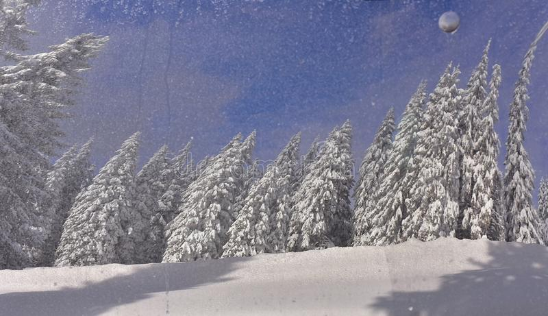 Beautiful Winter Abstract Spruce Snowy royalty free stock images