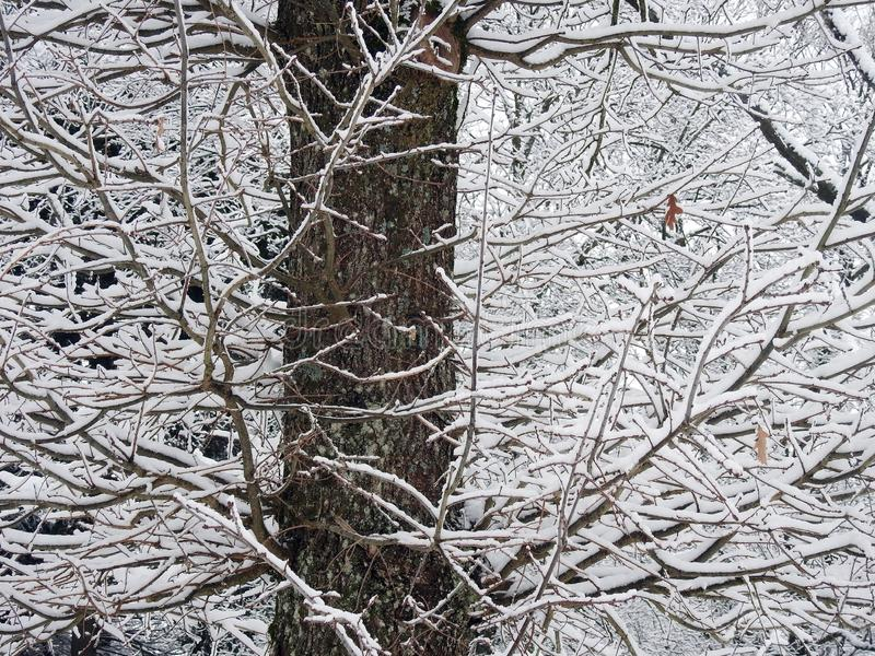 Beautiful snowy tree branches, Lithuania royalty free stock photos