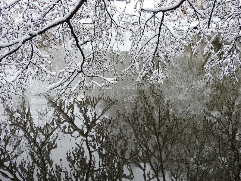Beautiful snowy tree branches and river, Lithuania stock photos