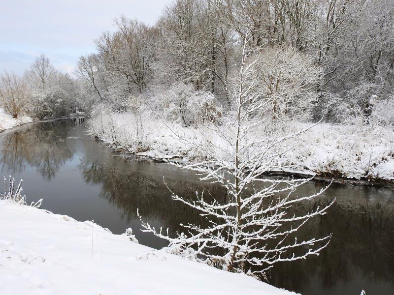 Beautiful snowy trees near river, Lithuania stock photo