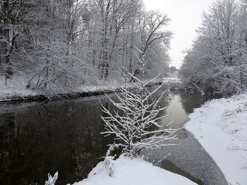 Beautiful snowy trees and river in winter, Lithuania royalty free stock images