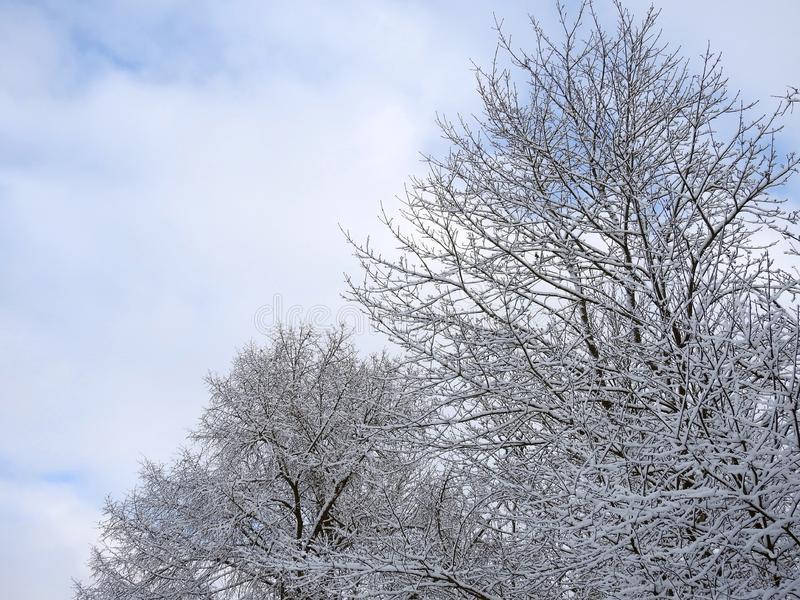Beautiful snowy trees in winter , Lithuania royalty free stock photos