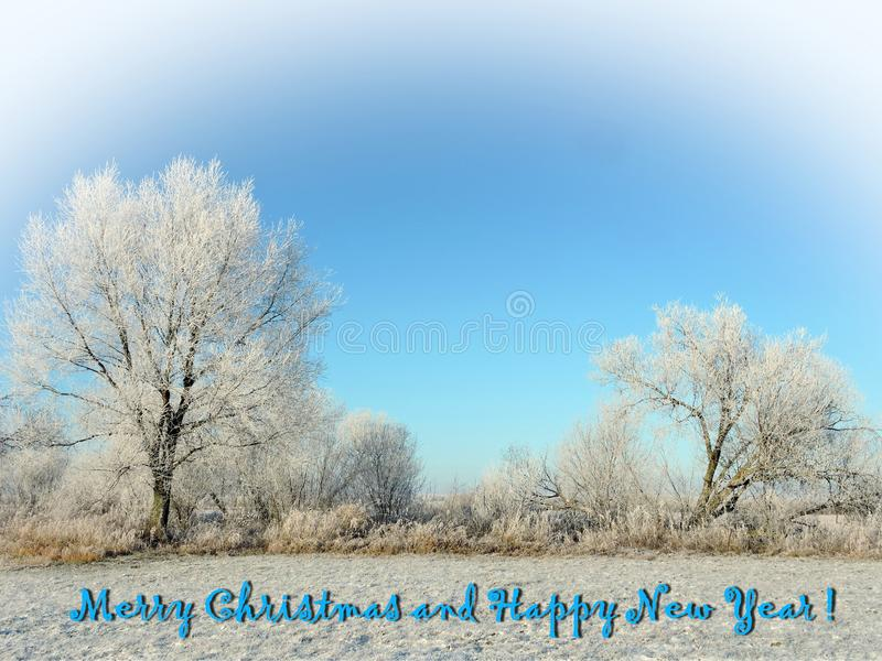 Beautiful snowy trees and words - Marry Christmas and Happy New Year. Beautiful white snowy trees in winter and words - Marry Christmas and Happy New Year royalty free stock photo