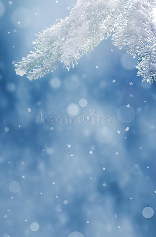 Beautiful snowy winter landscape with a snowy fir branch, snowflakes and blue sky. Winter christmas background. Winter concept stock photos