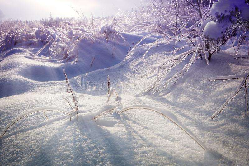 Beautiful snowy winter landscape. Icy tree branches and bushes. Gloomy sun. Shadows on snow stock photos