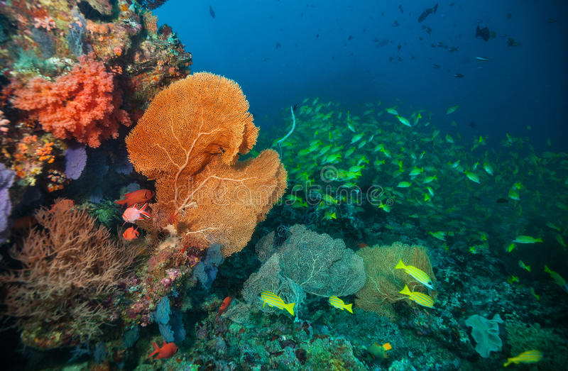 Beautiful soft coral reef in Indian ocean, Maldives stock photography