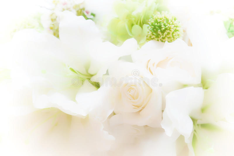 Beautiful soft focus flower with morning sunlight background., w. Allpaper made with color filters effect., soft sparkle pastel color stock illustration