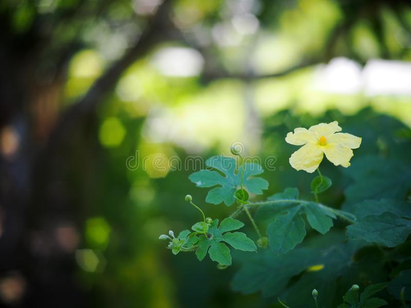 Beautiful soft tiny leaves flowers closeup outdoor under natural sunlight selective focus blur green garden background royalty free stock photo