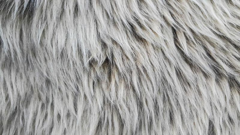 Sheep wool stock images