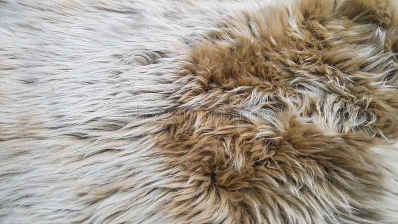 White and brown wool royalty free stock photos