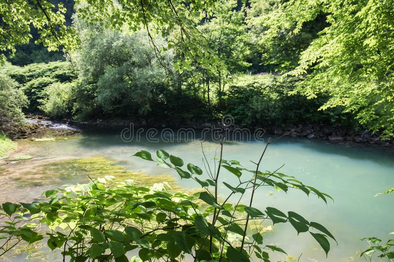 Beautiful source of ljubljanica in vrhnika, slovenia. In summertime stock photo