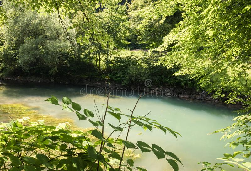 Beautiful source of ljubljanica in vrhnika, slovenia. In summertime royalty free stock image