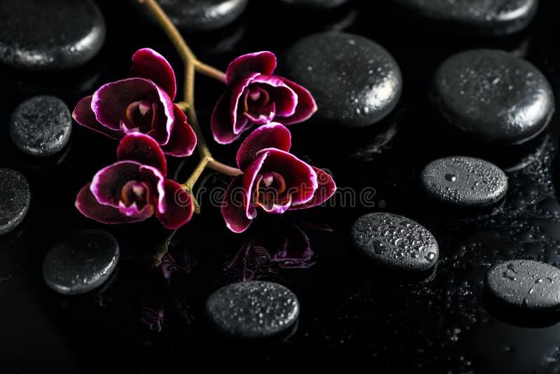 Beautiful spa έννοια του σκοτεινού λουλουδιού ορχιδεών κερασιών στο μαύρο zen στοκ εικόνες με δικαίωμα ελεύθερης χρήσης