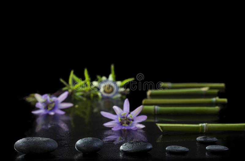 Beautiful spa composition with passiflora, bamboo and stones on black background. Beautiful spa composition with passiflora, bamboo and stones on black royalty free stock photography