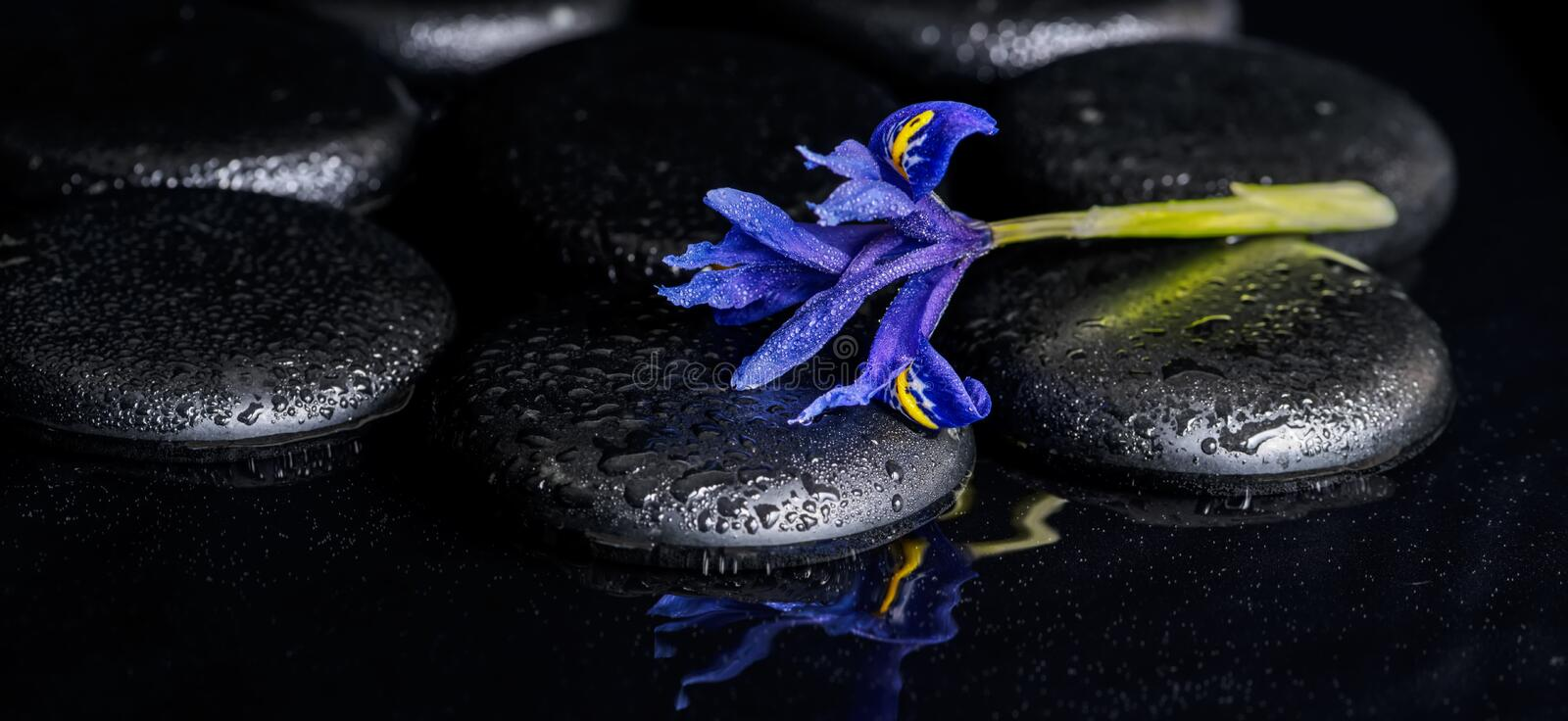 Beautiful spa concept of blooming iris flower and black zen stone. S on ripple reflection water, panorama stock photography