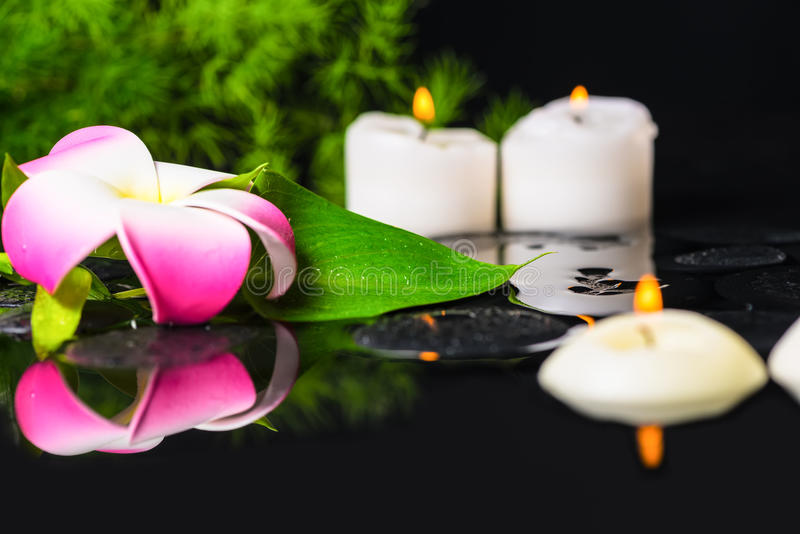 Beautiful spa concept groene bladcalla lelie, plumeria met Dr. stock fotografie