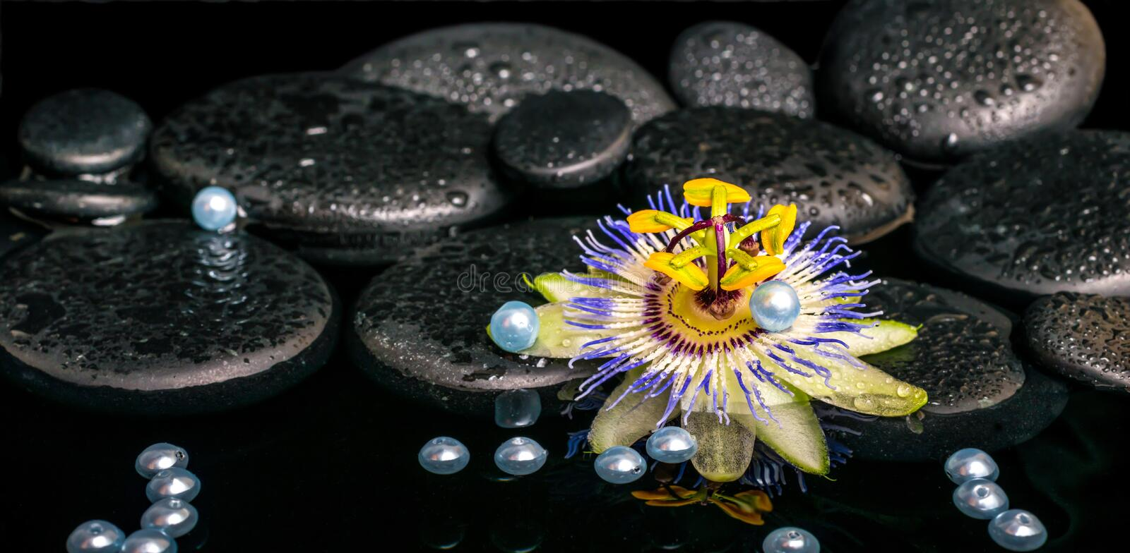 Beautiful spa setting of passiflora flower on zen basalt stones. With drops and pearl beads in reflection water, closeup stock images