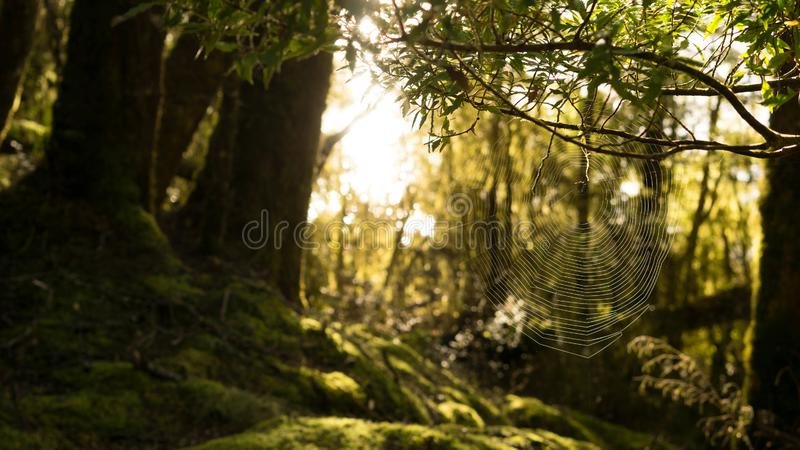 Beautiful spider web in the sunshine, Kepler track, New Zealand royalty free stock photo