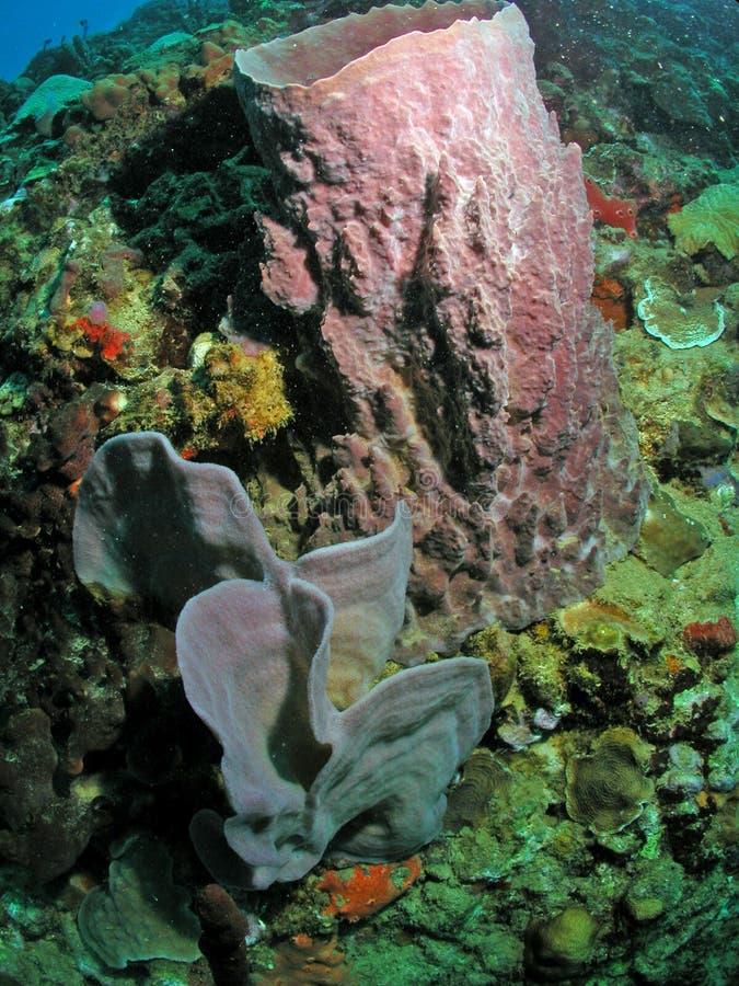 Beautiful sponge specimen of the coast of Dominica stock photo