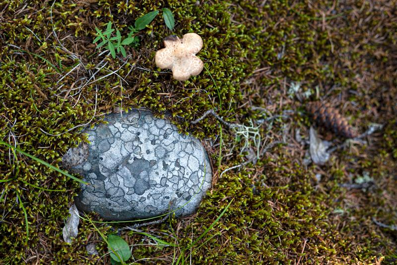 Beautiful spotted stone and small mushroom among moss stock photos