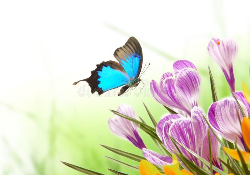 Beautiful Spring Background Stock Photos