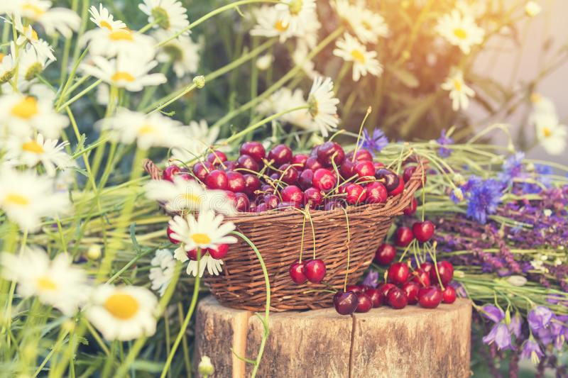 Beautiful spring background with cherries and flowers. Sunlight, sunset. stock photos