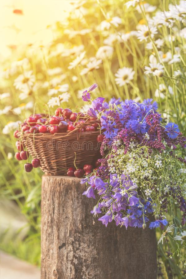 Beautiful spring background with cherries and flowers. Sunlight, sunset. stock photo