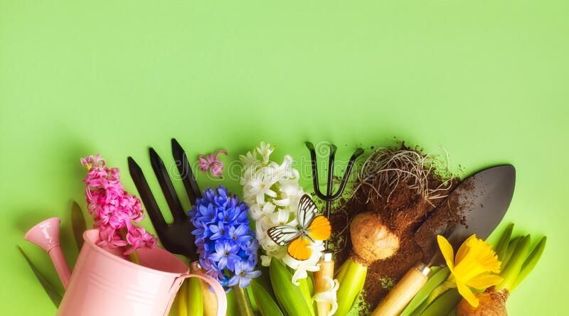 Beautiful spring background with gardening tools, colorful flowers and butterfly. Top view stock photo