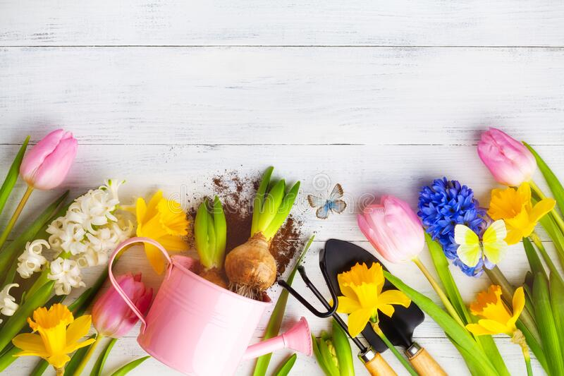 Beautiful spring background with gardening tools, seedling of colorful flowers and butterflies. Top view stock image
