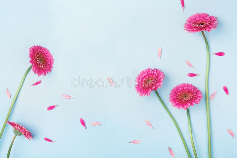Beautiful spring background with pink flowers and petals. Floral frame. Flat lay style. royalty free stock photos