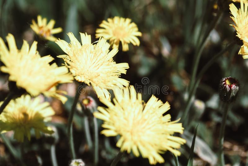 Beautiful spring background of yellow May colors. Beautiful spring background of yellow colors stock photo