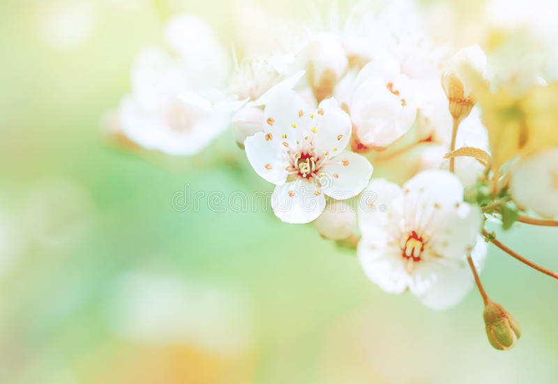 Beautiful spring blooming stock images