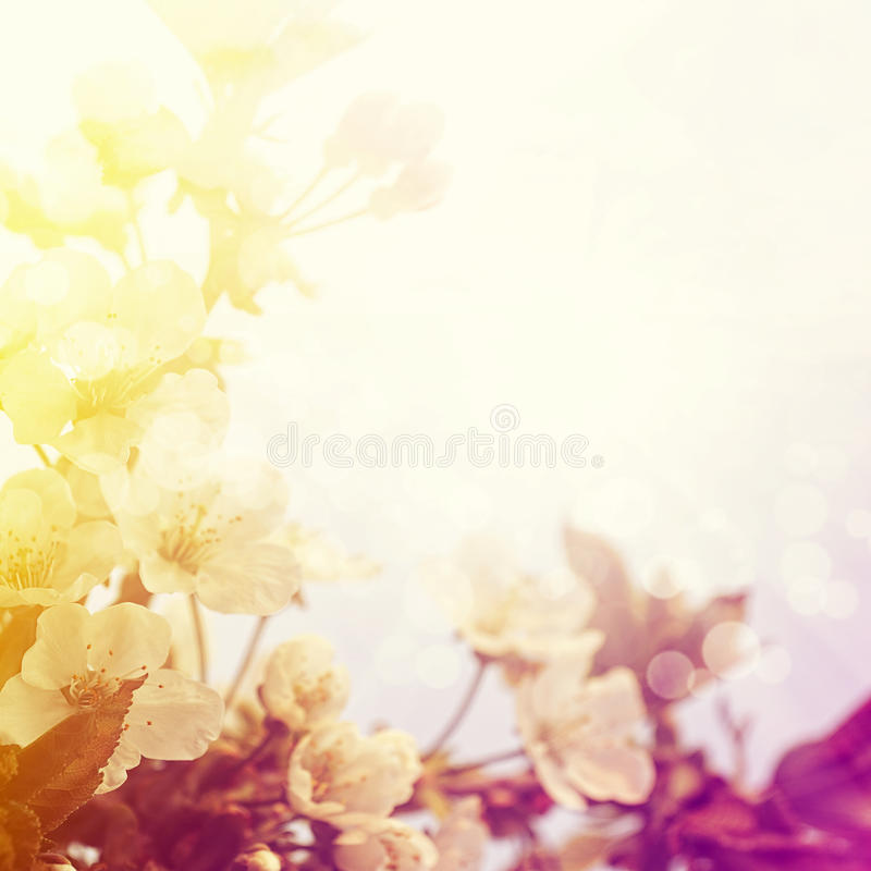 Beautiful spring blossoming royalty free illustration