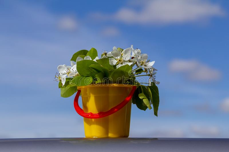Bouquet of white flowers on a blue background royalty free stock images