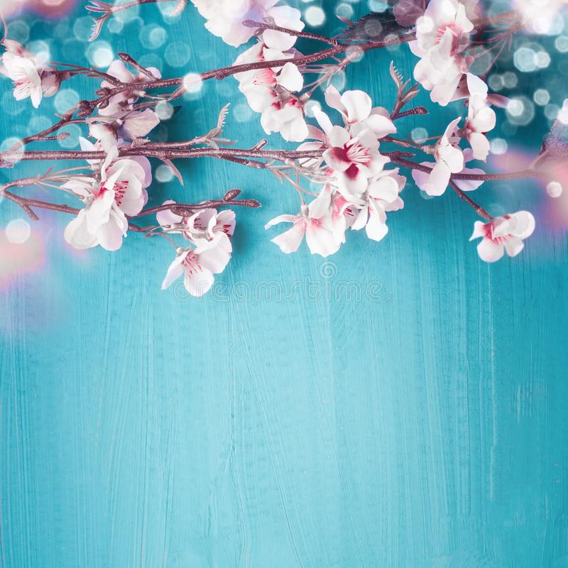 Beautiful spring cherry blossom branches on turquoise blue background with copy space for your design. Springtime holidays and royalty free stock images