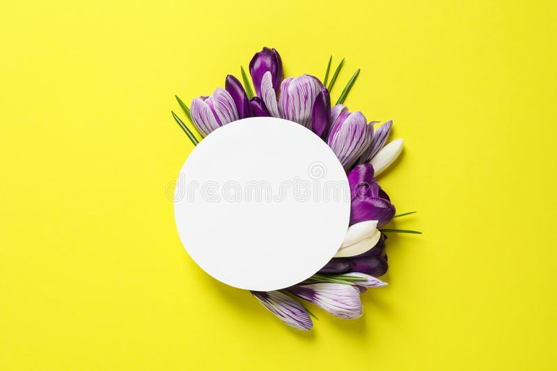Beautiful spring crocus flowers and card on color background, flat lay royalty free stock image