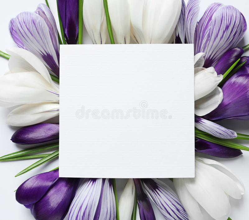 Beautiful spring crocus flowers and card on white background, top view stock images