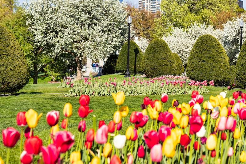 Beautiful spring day at Boston Common Park Massachusetts. Nice view at sunny day with blue sky royalty free stock photography