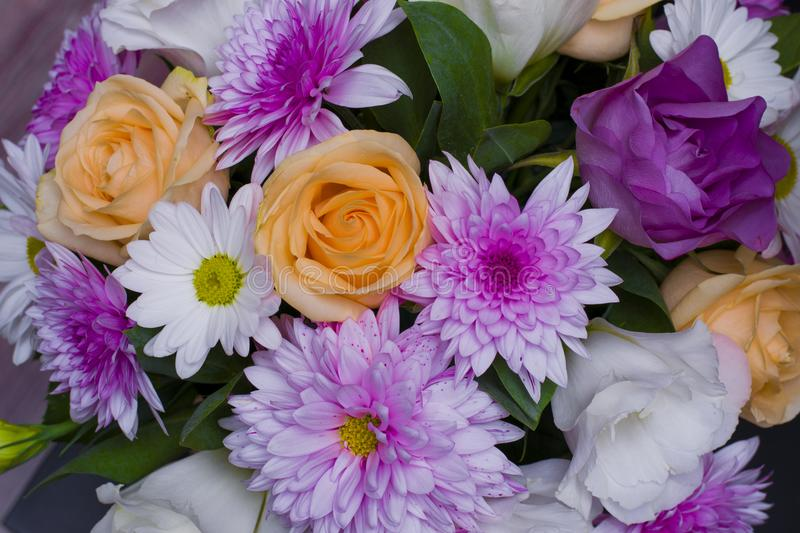 The Beautiful spring flower of purple color. Beautiful spring flower of purple color stock photo