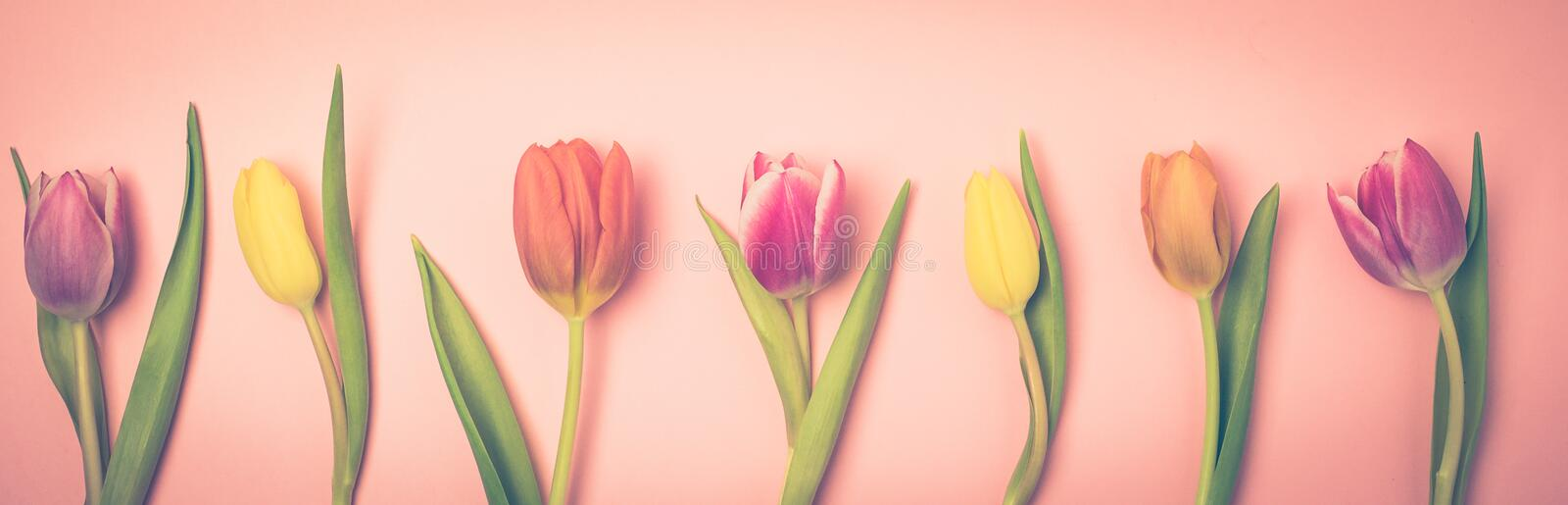 Beautiful Spring Flowers Background Bunch of Tulip Flowers Pink Background Top View Long Toned stock images