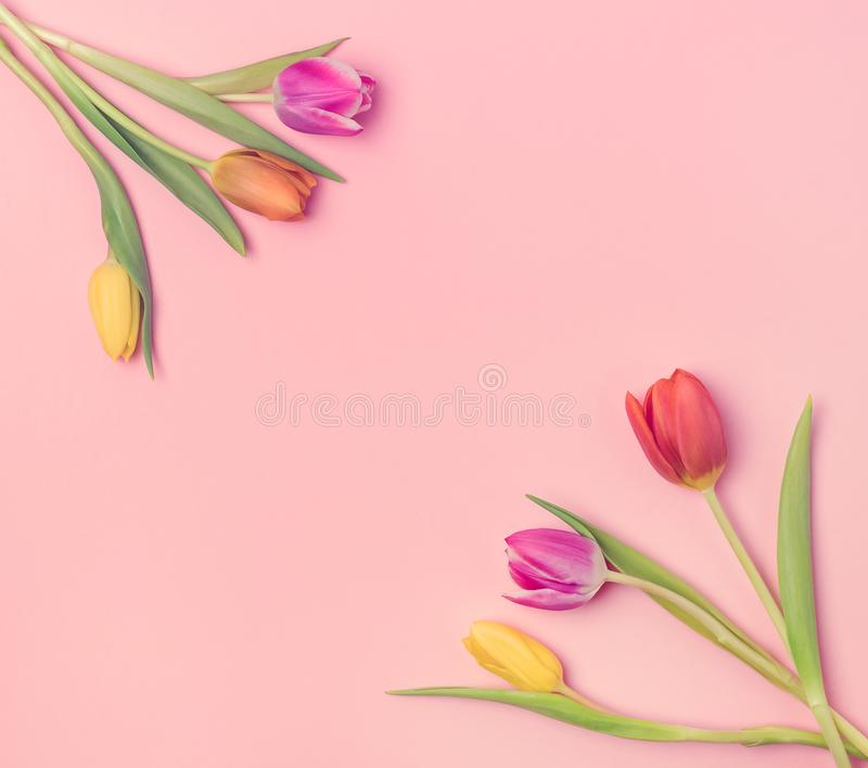 Beautiful Spring Flowers Background Bunch of Tulip Flowers on Pink Background Top View Square Frame Toned. Beautiful Spring Flowers Background Bunch of Tulip stock photos
