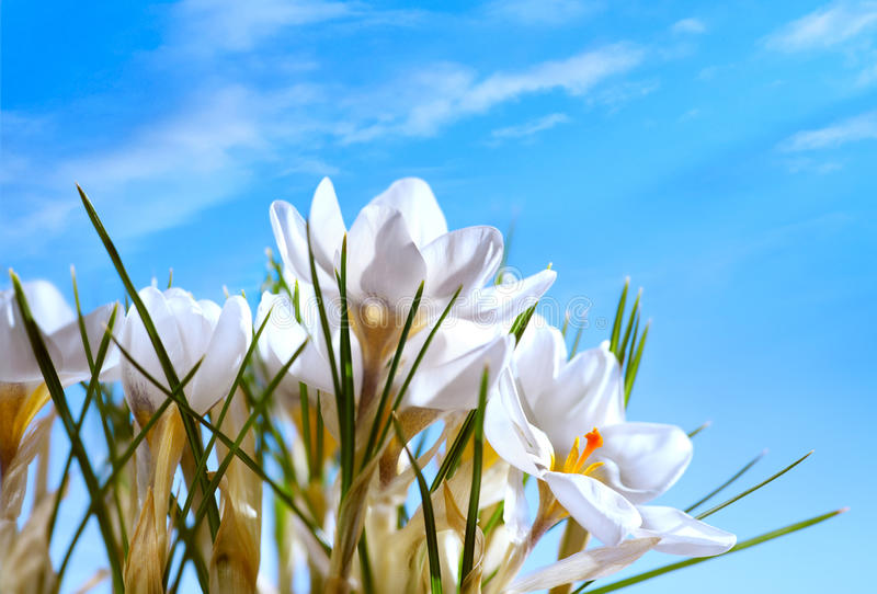 Download Beautiful Spring Flowers On Blue Sky Background Stock Image - Image: 23367795