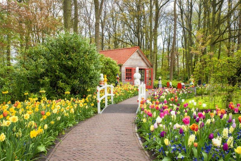 Beautiful spring flowers in Keukenhof park in Netherlands stock photo