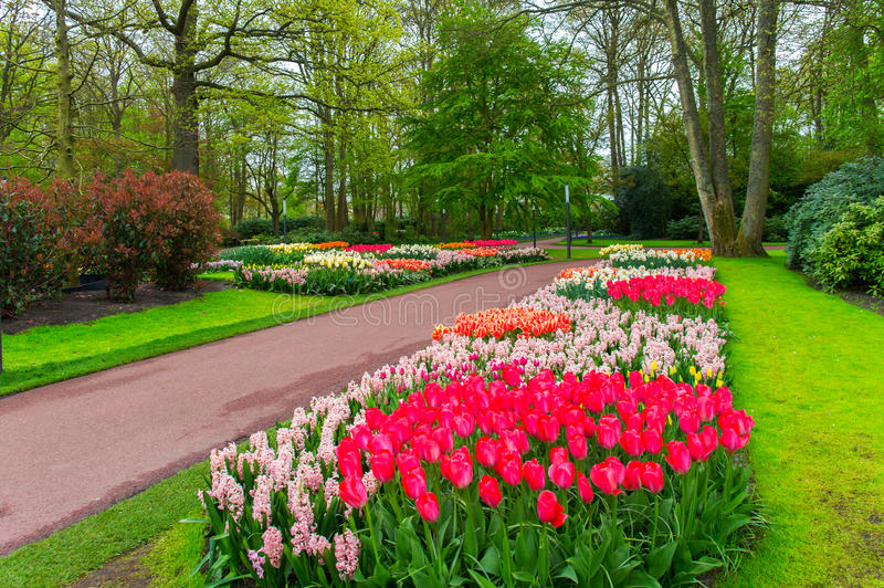 Beautiful spring flowers in Keukenhof park in Netherlands. (Holland royalty free stock image
