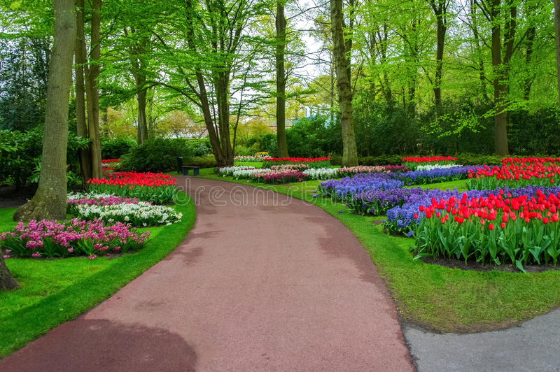 Beautiful spring flowers in Keukenhof park in Netherlands. (Holland royalty free stock photography